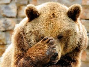 bear-spray-2