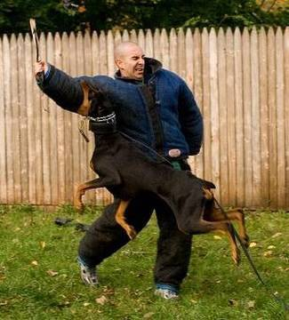 If My Dog Bites Someone In My Yard